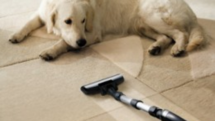7 Carpet Cleaning Tips for Pet Owners